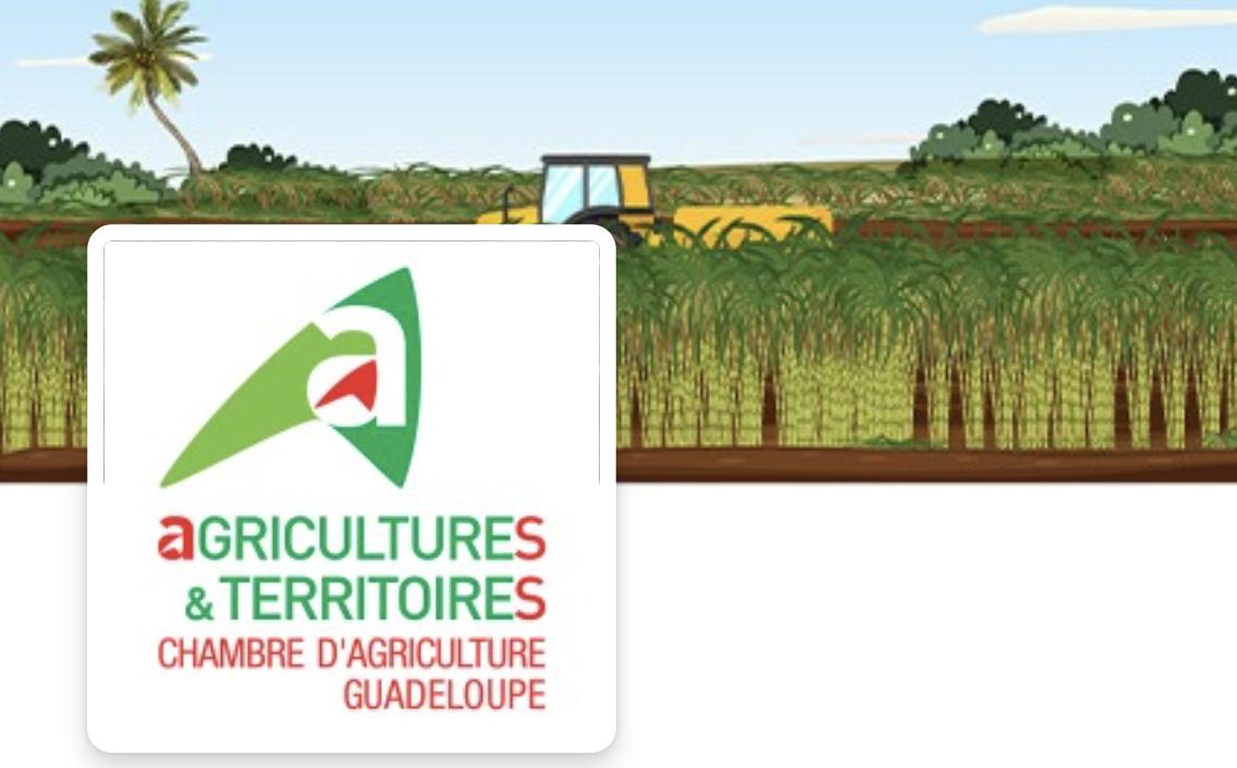 Agriculture et Territoire : Journée Technique à Marie Galante l'Agro-écologie et    Les cultures de diversification