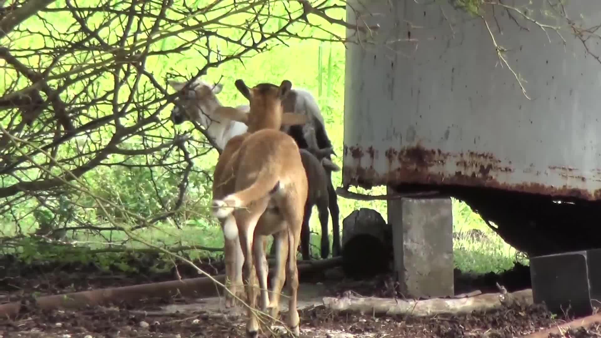 Parlons élevage avec Audry COLMAR, un éleveur marie galantais engagé