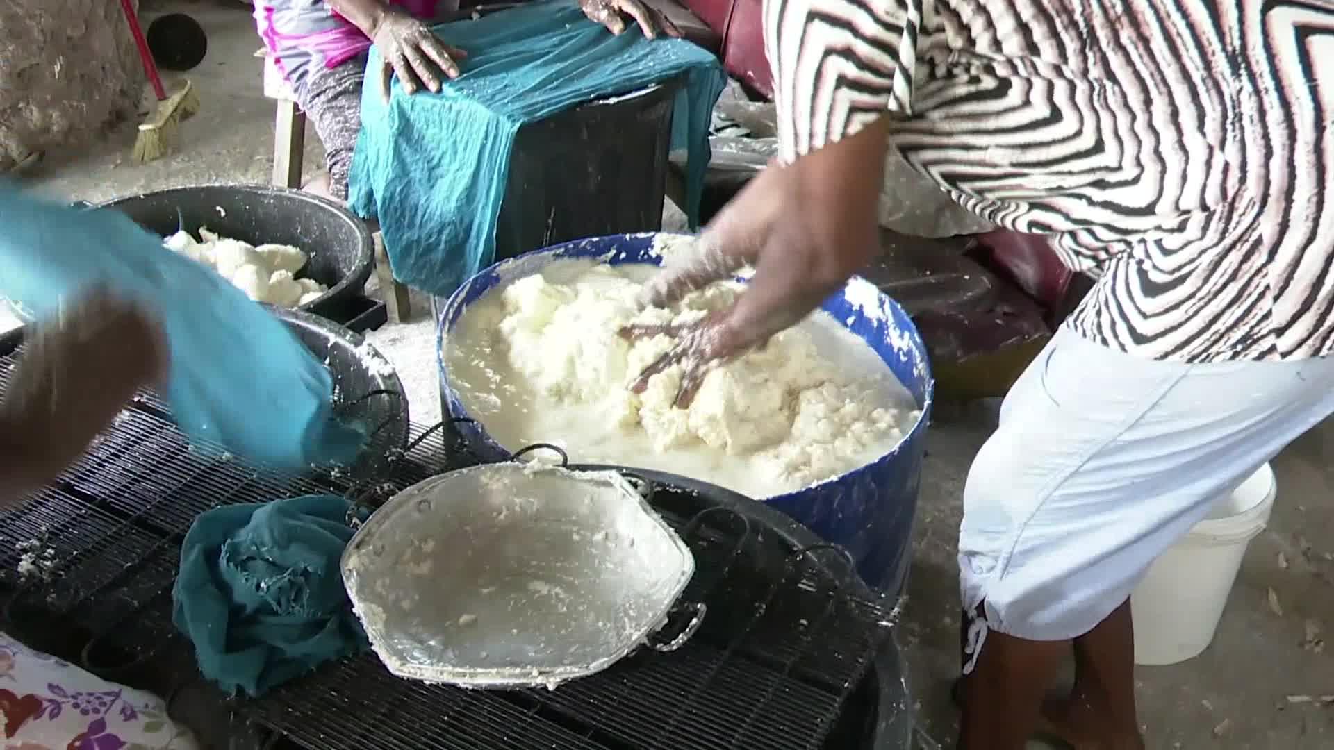 Capesterre de Marie Galante : la fabrication de la farine manioc