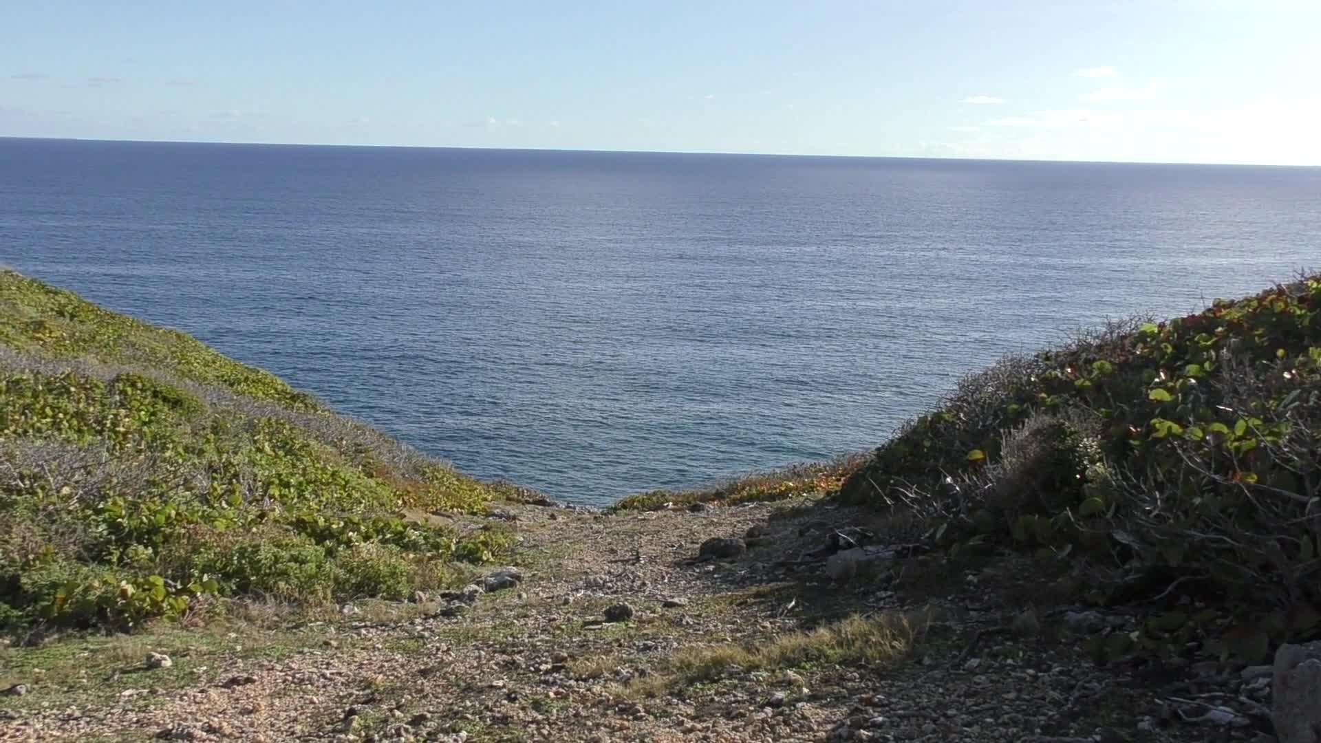 Randonnée nature : la découverte des falaises de Marie Galante et de la forêt xerophile