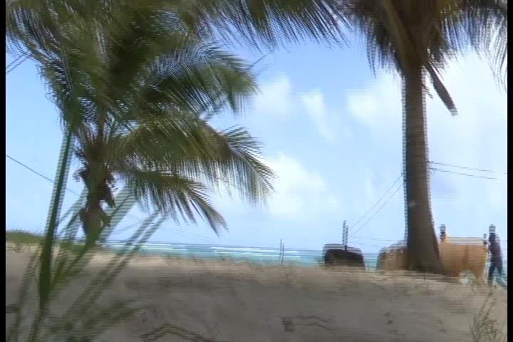 Spectacle insolite sur la très belle plage de La Feuillère : des Boeufs faisaient une démonstration au son du lewoz