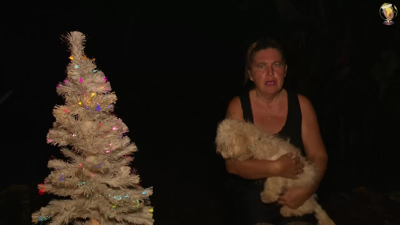 J-19 La star du conte de ce soir en Images c'est Mirliton le petit chien des rues